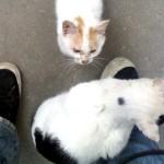 她就这样站在我鞋子上,可能因为今天太冷了?怕肉垫着凉?长的有点丑……